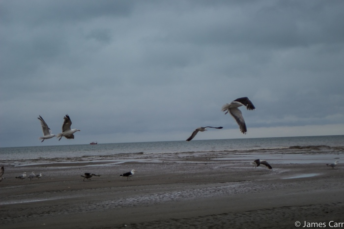 Time to move on lads. Baltray beach, Co. Louth