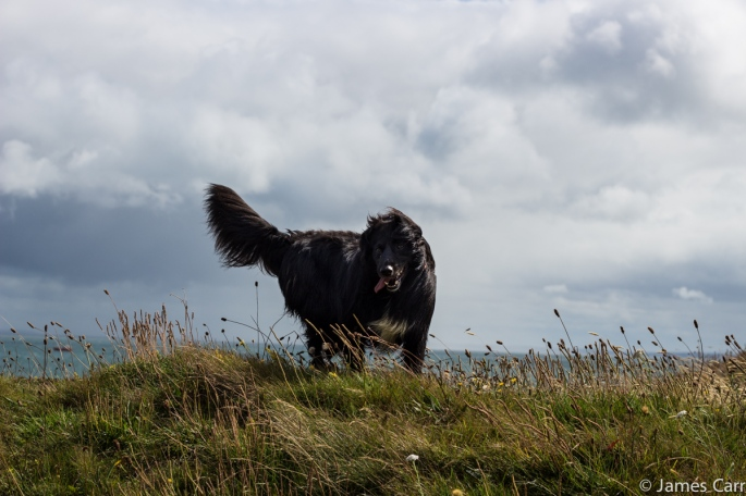 Pippa, Windswept and interesting. Clogherhead, Co. Louth.