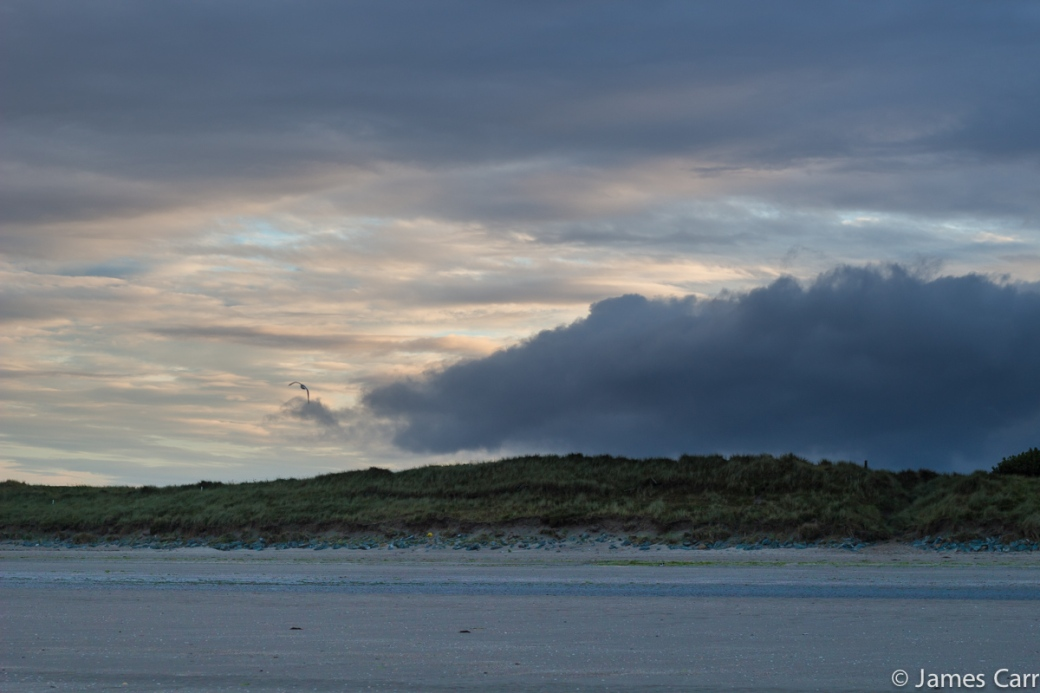 Bird flies ahead of the cloud spike. Termonfecking Beach, Co. Louth