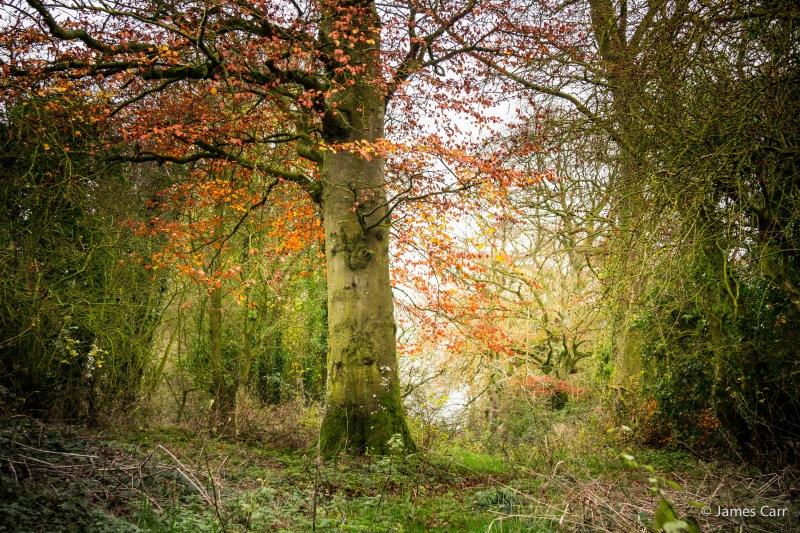 Ratoath woods, 30th Nov 2014